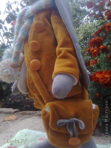 Заяц Пьер фото 3