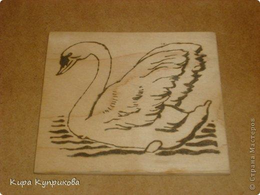 Вот он мой лебедь! фото 1