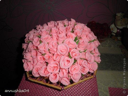 мои первые розы