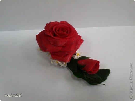 Бархатная роза фото 6