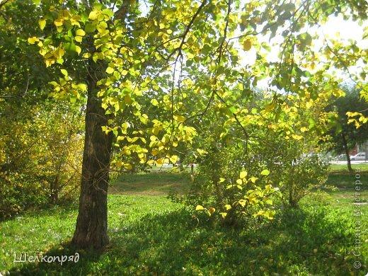 Нагулявшись по лесу, возвращаюсь в город. Здесь тоже очень красиво, хотя не всегда есть солнце. Поэтому фотографии уже не так светятся изнутри. фото 21