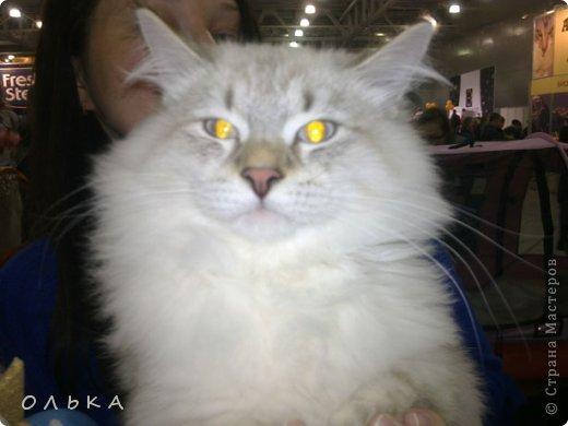Привет всем! хочу поделится с вами хорошим настроением - я сегодня целый день провела на выставке кошек!!! Нахваталась позитива!!!!!!!  Столько эмоций, столько радости))) Это одна из самых крупных выставок, которые я посещала. Было около 1500  кошек! Такие разные, такие хорошие! Наслаждайтесь и вы))))   Первый - невский маскарадный! Важный такой) фото 1