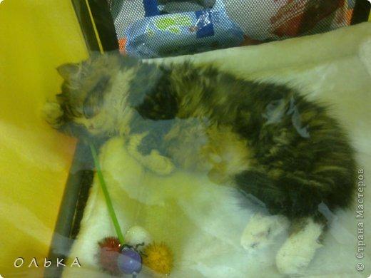 Привет всем! хочу поделится с вами хорошим настроением - я сегодня целый день провела на выставке кошек!!! Нахваталась позитива!!!!!!!  Столько эмоций, столько радости))) Это одна из самых крупных выставок, которые я посещала. Было около 1500  кошек! Такие разные, такие хорошие! Наслаждайтесь и вы))))   Первый - невский маскарадный! Важный такой) фото 14