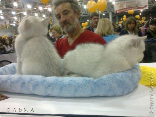 Привет всем! хочу поделится с вами хорошим настроением - я сегодня целый день провела на выставке кошек!!! Нахваталась позитива!!!!!!!  Столько эмоций, столько радости))) Это одна из самых крупных выставок, которые я посещала. Было около 1500  кошек! Такие разные, такие хорошие! Наслаждайтесь и вы))))   Первый - невский маскарадный! Важный такой) фото 5