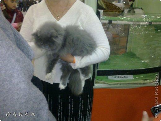Привет всем! хочу поделится с вами хорошим настроением - я сегодня целый день провела на выставке кошек!!! Нахваталась позитива!!!!!!!  Столько эмоций, столько радости))) Это одна из самых крупных выставок, которые я посещала. Было около 1500  кошек! Такие разные, такие хорошие! Наслаждайтесь и вы))))   Первый - невский маскарадный! Важный такой) фото 3