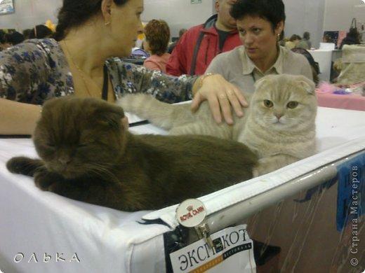 Привет всем! хочу поделится с вами хорошим настроением - я сегодня целый день провела на выставке кошек!!! Нахваталась позитива!!!!!!!  Столько эмоций, столько радости))) Это одна из самых крупных выставок, которые я посещала. Было около 1500  кошек! Такие разные, такие хорошие! Наслаждайтесь и вы))))   Первый - невский маскарадный! Важный такой) фото 7