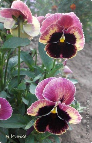 Люблю цветы! Ни одно торжество, ни один праздник не могут быть по-настоящему прекрасными, радостными без цветов. Во все времена, начиная с глубокой древности, в радости и даже в печали люди обращались к цветам. Без них жизнь потеряла бы многие свои краски и была бы куда беднее.   Цветы — наши постоянные и добрые друзья. Они украшают жизнь, приносят радость. Самые ранние нарциссы. фото 28