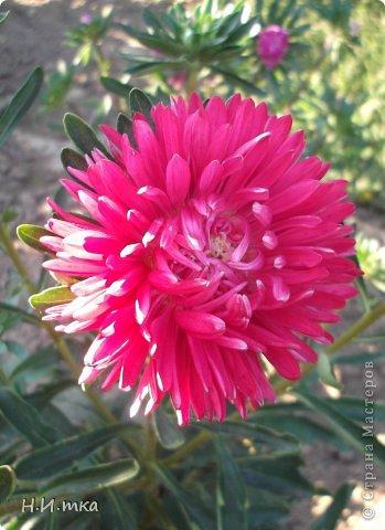 Люблю цветы! Ни одно торжество, ни один праздник не могут быть по-настоящему прекрасными, радостными без цветов. Во все времена, начиная с глубокой древности, в радости и даже в печали люди обращались к цветам. Без них жизнь потеряла бы многие свои краски и была бы куда беднее.   Цветы — наши постоянные и добрые друзья. Они украшают жизнь, приносят радость. Самые ранние нарциссы. фото 20