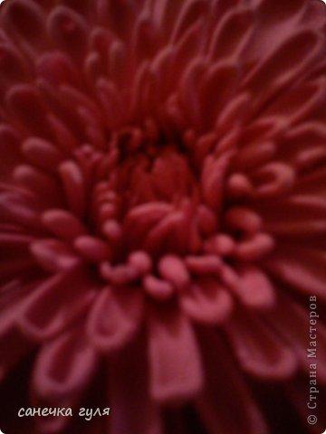 Вот такая хризантемка у меня получилась!Пока только цветок,без листьев. фото 3