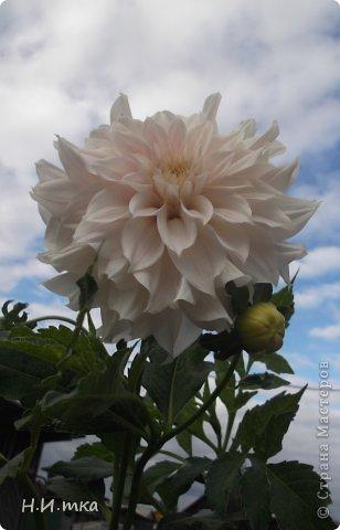 Люблю цветы! Ни одно торжество, ни один праздник не могут быть по-настоящему прекрасными, радостными без цветов. Во все времена, начиная с глубокой древности, в радости и даже в печали люди обращались к цветам. Без них жизнь потеряла бы многие свои краски и была бы куда беднее.   Цветы — наши постоянные и добрые друзья. Они украшают жизнь, приносят радость. Самые ранние нарциссы. фото 32