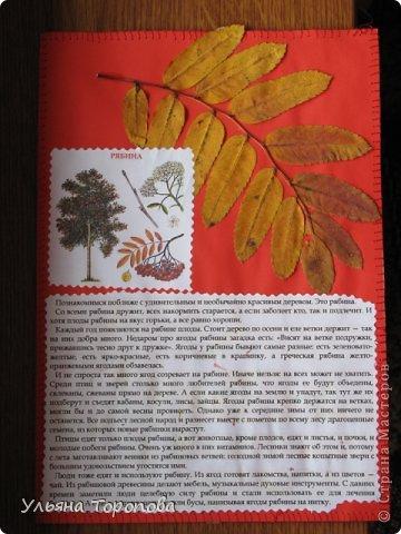 """Всем привет! Вот первые странички нашего альбома-гербария, выполненные в рамках проекта """"Каждому ребенку - гербарий"""", организованному ЛЁКА ЛЁКИНА. Всем заинтересованным сюда http://stranamasterov.ru/node/427335?tid=903 фото 5"""