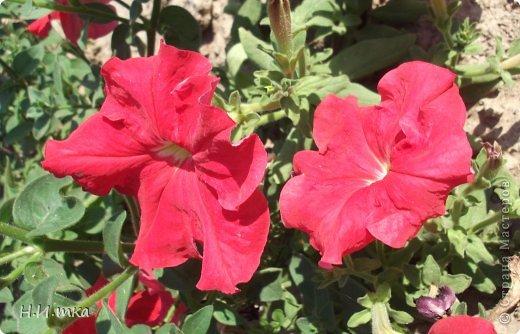 Люблю цветы! Ни одно торжество, ни один праздник не могут быть по-настоящему прекрасными, радостными без цветов. Во все времена, начиная с глубокой древности, в радости и даже в печали люди обращались к цветам. Без них жизнь потеряла бы многие свои краски и была бы куда беднее.   Цветы — наши постоянные и добрые друзья. Они украшают жизнь, приносят радость. Самые ранние нарциссы. фото 14
