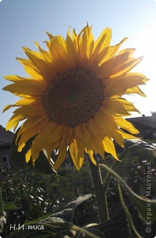 Люблю цветы! Ни одно торжество, ни один праздник не могут быть по-настоящему прекрасными, радостными без цветов. Во все времена, начиная с глубокой древности, в радости и даже в печали люди обращались к цветам. Без них жизнь потеряла бы многие свои краски и была бы куда беднее.   Цветы — наши постоянные и добрые друзья. Они украшают жизнь, приносят радость. Самые ранние нарциссы. фото 25