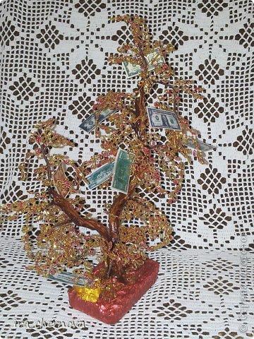 Денежное дерево. фото 1