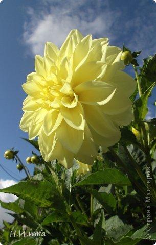 Люблю цветы! Ни одно торжество, ни один праздник не могут быть по-настоящему прекрасными, радостными без цветов. Во все времена, начиная с глубокой древности, в радости и даже в печали люди обращались к цветам. Без них жизнь потеряла бы многие свои краски и была бы куда беднее.   Цветы — наши постоянные и добрые друзья. Они украшают жизнь, приносят радость. Самые ранние нарциссы. фото 39
