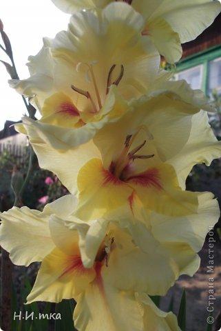 Люблю цветы! Ни одно торжество, ни один праздник не могут быть по-настоящему прекрасными, радостными без цветов. Во все времена, начиная с глубокой древности, в радости и даже в печали люди обращались к цветам. Без них жизнь потеряла бы многие свои краски и была бы куда беднее.   Цветы — наши постоянные и добрые друзья. Они украшают жизнь, приносят радость. Самые ранние нарциссы. фото 46