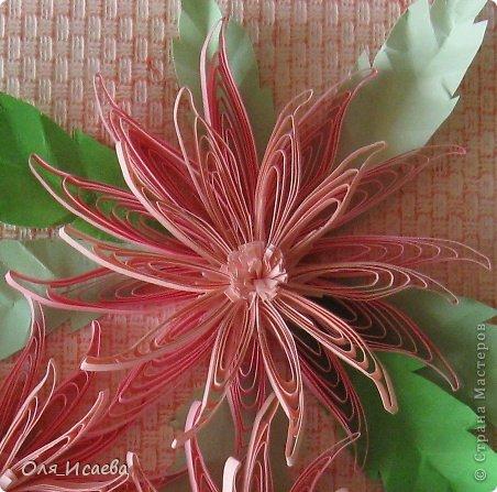 Идея не новая и не моя. Хризантем таких много. Но уж очень они красивы, пройти мимо не могла. фото 3