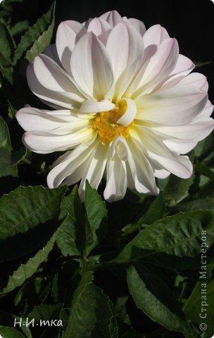 Люблю цветы! Ни одно торжество, ни один праздник не могут быть по-настоящему прекрасными, радостными без цветов. Во все времена, начиная с глубокой древности, в радости и даже в печали люди обращались к цветам. Без них жизнь потеряла бы многие свои краски и была бы куда беднее.   Цветы — наши постоянные и добрые друзья. Они украшают жизнь, приносят радость. Самые ранние нарциссы. фото 45