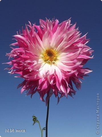 Люблю цветы! Ни одно торжество, ни один праздник не могут быть по-настоящему прекрасными, радостными без цветов. Во все времена, начиная с глубокой древности, в радости и даже в печали люди обращались к цветам. Без них жизнь потеряла бы многие свои краски и была бы куда беднее.   Цветы — наши постоянные и добрые друзья. Они украшают жизнь, приносят радость. Самые ранние нарциссы. фото 43
