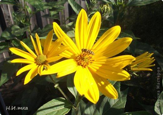 Люблю цветы! Ни одно торжество, ни один праздник не могут быть по-настоящему прекрасными, радостными без цветов. Во все времена, начиная с глубокой древности, в радости и даже в печали люди обращались к цветам. Без них жизнь потеряла бы многие свои краски и была бы куда беднее.   Цветы — наши постоянные и добрые друзья. Они украшают жизнь, приносят радость. Самые ранние нарциссы. фото 51