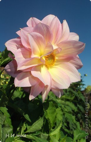 Люблю цветы! Ни одно торжество, ни один праздник не могут быть по-настоящему прекрасными, радостными без цветов. Во все времена, начиная с глубокой древности, в радости и даже в печали люди обращались к цветам. Без них жизнь потеряла бы многие свои краски и была бы куда беднее.   Цветы — наши постоянные и добрые друзья. Они украшают жизнь, приносят радость. Самые ранние нарциссы. фото 40
