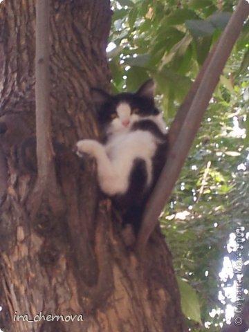 Денежное дерево. фото 16