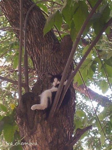 Денежное дерево. фото 14