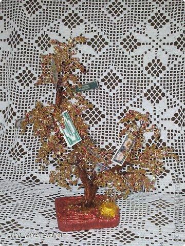 Денежное дерево. фото 2