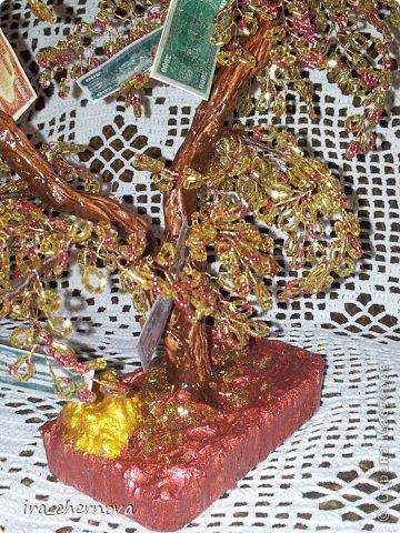 Денежное дерево. фото 3