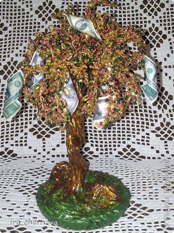 Денежное дерево. фото 4
