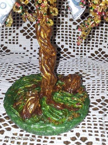 Денежное дерево. фото 5