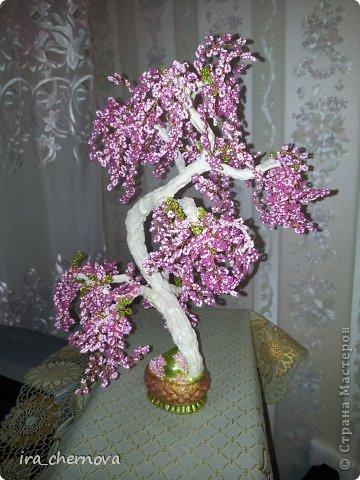 Денежное дерево. фото 11