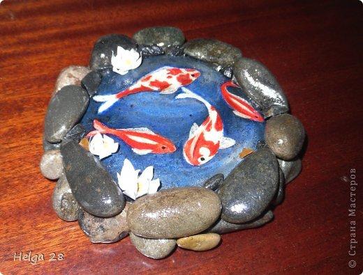 Живые камни фото 4