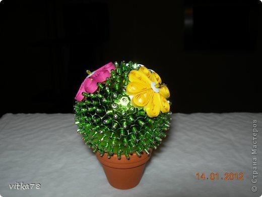 кактус фото 1