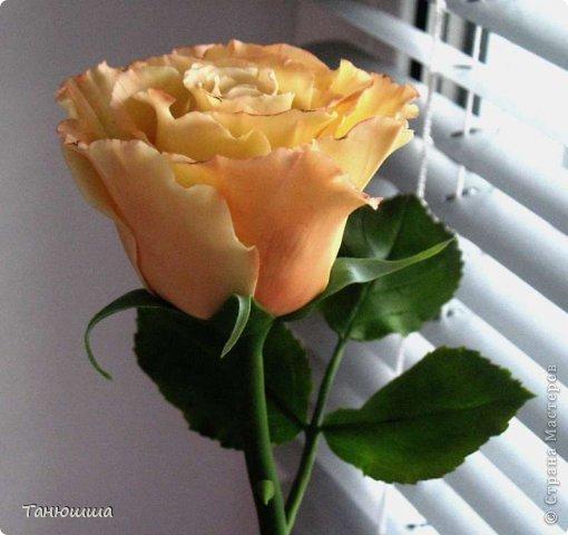 Привет всем! Вот мои последние розы (ухожу в отпуск насчёт лепки, но думаю ненадолго :)) Планов много, зима впереди, буду осваивать новые цветочки.  фото 4