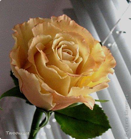 Привет всем! Вот мои последние розы (ухожу в отпуск насчёт лепки, но думаю ненадолго :)) Планов много, зима впереди, буду осваивать новые цветочки.  фото 5
