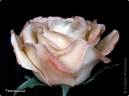 Привет всем! Вот мои последние розы (ухожу в отпуск насчёт лепки, но думаю ненадолго :)) Планов много, зима впереди, буду осваивать новые цветочки.  фото 10