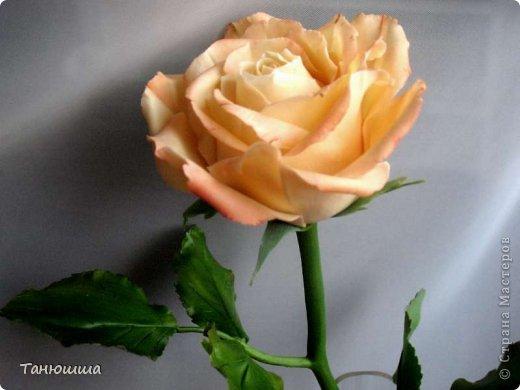 Привет всем! Вот мои последние розы (ухожу в отпуск насчёт лепки, но думаю ненадолго :)) Планов много, зима впереди, буду осваивать новые цветочки.  фото 9