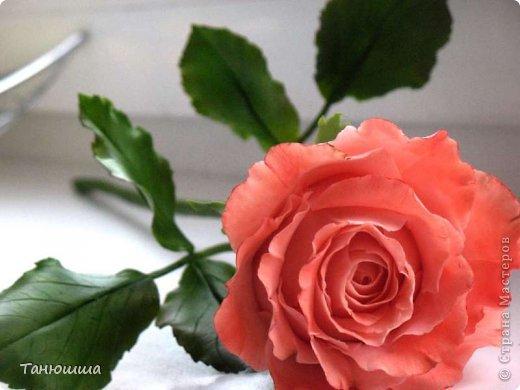 Привет всем! Вот мои последние розы (ухожу в отпуск насчёт лепки, но думаю ненадолго :)) Планов много, зима впереди, буду осваивать новые цветочки.  фото 8