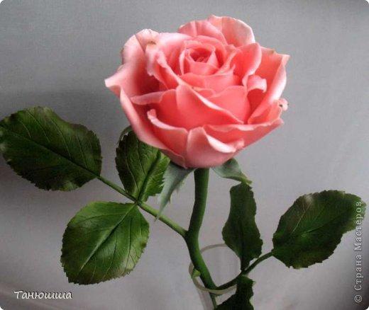 Привет всем! Вот мои последние розы (ухожу в отпуск насчёт лепки, но думаю ненадолго :)) Планов много, зима впереди, буду осваивать новые цветочки.  фото 2