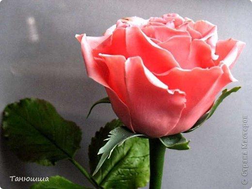 Привет всем! Вот мои последние розы (ухожу в отпуск насчёт лепки, но думаю ненадолго :)) Планов много, зима впереди, буду осваивать новые цветочки.  фото 3