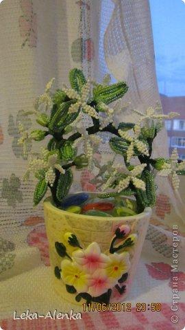 Цветущая мимоза свекрови на день рождения! фото 1
