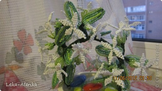 Цветущая мимоза свекрови на день рождения! фото 2