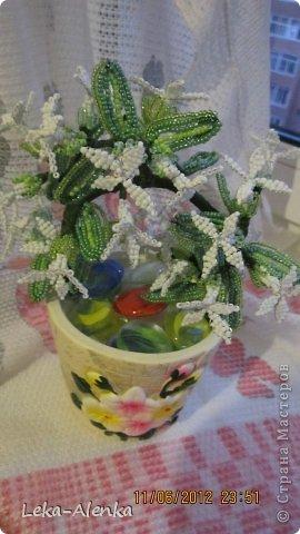 Цветущая мимоза свекрови на день рождения! фото 3
