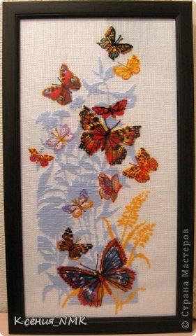 Бабочки!
