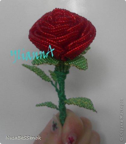 роза в полном размере