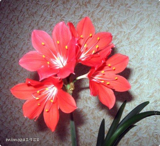 Вот такие цветочные горшки получила подруга для своих цветов фото 11