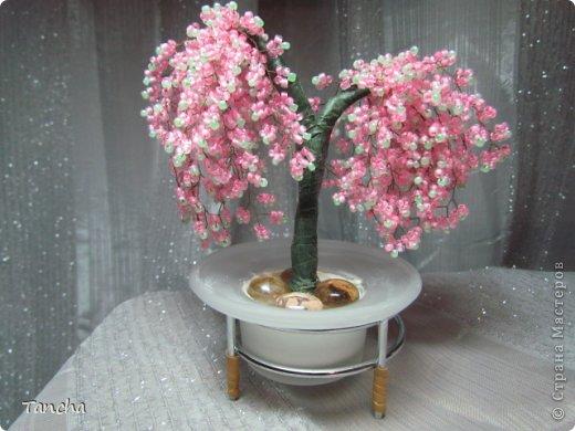 Орхидея фото 3