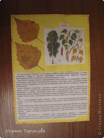 """Всем привет! Вот первые странички нашего альбома-гербария, выполненные в рамках проекта """"Каждому ребенку - гербарий"""", организованному ЛЁКА ЛЁКИНА. Всем заинтересованным сюда http://stranamasterov.ru/node/427335?tid=903 фото 10"""