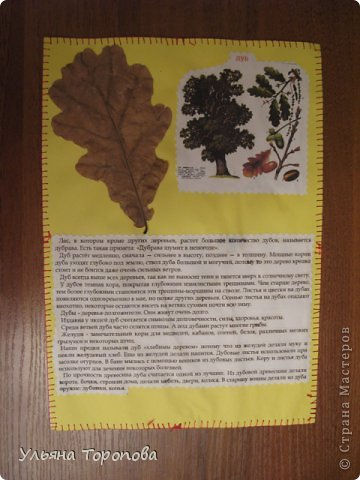 """Всем привет! Вот первые странички нашего альбома-гербария, выполненные в рамках проекта """"Каждому ребенку - гербарий"""", организованному ЛЁКА ЛЁКИНА. Всем заинтересованным сюда http://stranamasterov.ru/node/427335?tid=903 фото 12"""